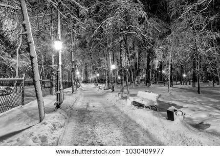 Winter park at night with decorations, lights, benches and trees. Christmas spruce on a baxhground. Monochrome. #1030409977