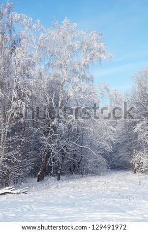 Winter park in snow against blue sky