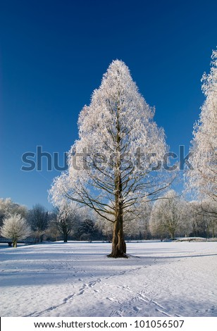 Winter park in snow with blue sky and white trees