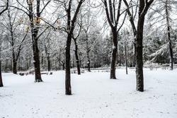 Winter Park trees