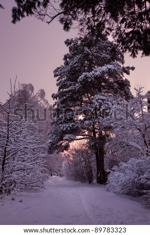 Winter park under snow at sunset - stock photo