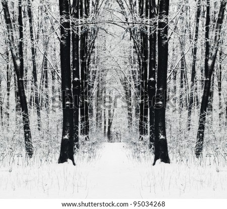 Winter path in the forest