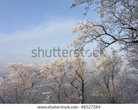 Winter picture of trees in a white frost on a sunny day