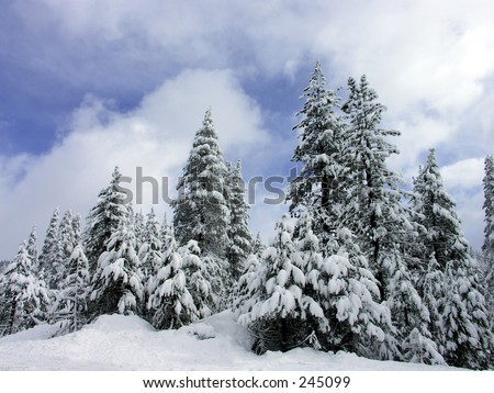 Winter Pines, Lake Tahoe, Northern California