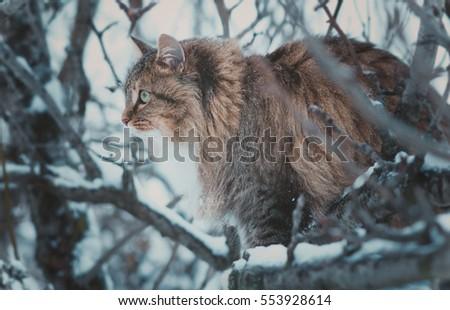 winter portrait of a beautiful...
