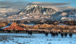 Winter Ranching Scene in Western Colorado