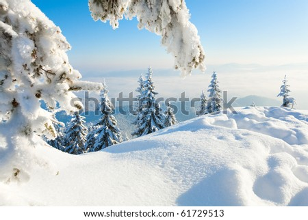 Winter rime and snow covered fir Christmas trees on mountainside