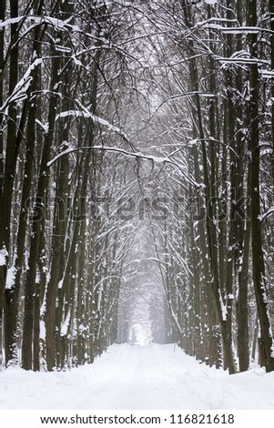 Winter road among trees covered with a snow
