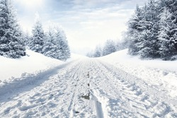 winter road and snow with landscape of trees with frost