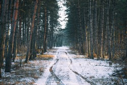 winter road , forest with pine trees