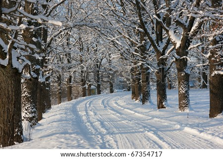 Winter road in country side with oak trees, Latvia, Baltic state, Europe