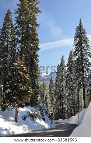 Winter road in forest covered by snow. Sequoia National Park in California, USA