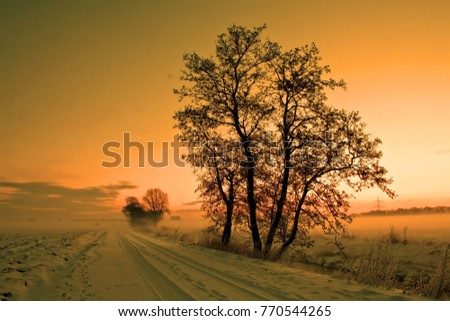 Winter road in January #770544265