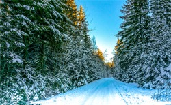 Winter road in nature woods at Christmas
