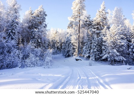 Winter road in winter forest #525447040