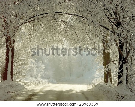 Winter road running between the frozen trees. Magic rays of the sun fall on the branches of trees.