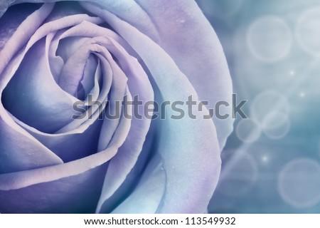Winter Flowering Plants Winter Rose Winter Flower