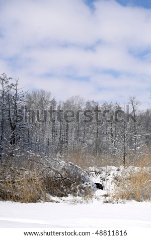 stock-photo-winter-rural-landscape-after-the-snowfall-48811816.jpg