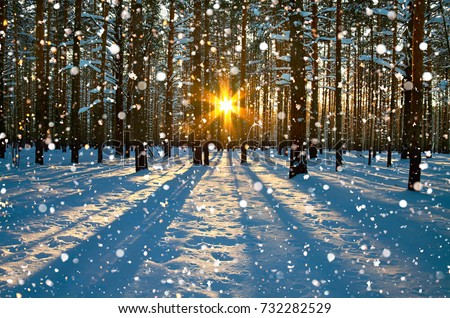 winter rural landscape with forest, sun and snow. sunset in winter forest. sun rays shine through trees. wintry sunrise. #732282529