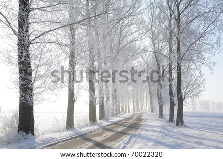 Winter rural road among frosted trees illuminated by the morning sun.