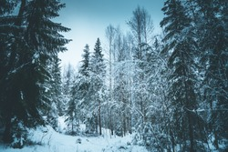 Winter Scandinavian forest after snowfall on a sunny day