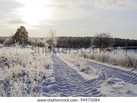 Winter scenary