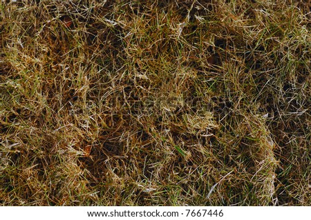 Winter scene Image of Dormant lawn grass  Background