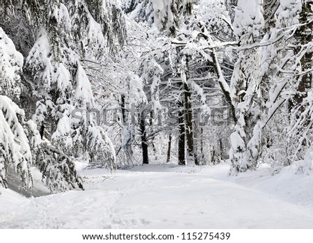Winter scene in forest