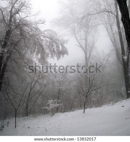 Winter scene in  forest