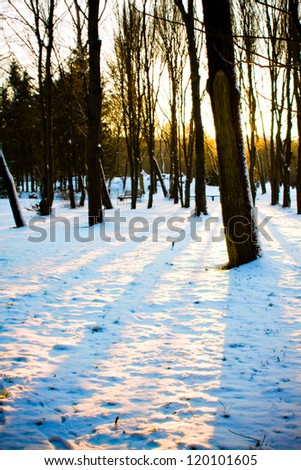 Winter scene of a forest and sunset