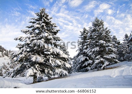 Winter Scene of Snow Covered Trees