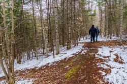 Winter scene showing forest and two bystanders walking through trail