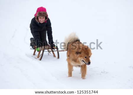 winter scene with a cute Elo dog pulling a laughing girl on a sleigh
