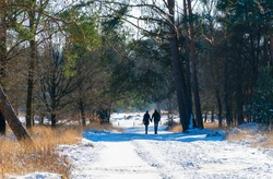 Winter scene with snow and a wandering couple in the forest