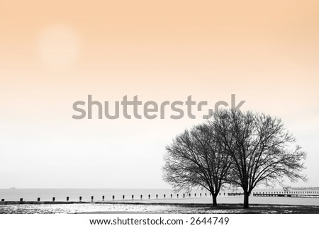 Winter scene with trees by the lake