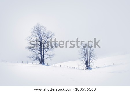 Winter scene with two snowy trees, toned image.