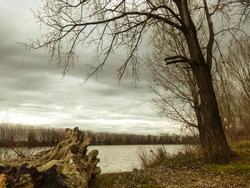 Winter scenery at the riverside, with a treetrunk and bare trees.