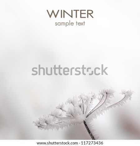 Winter scenery - close up of frozen plant