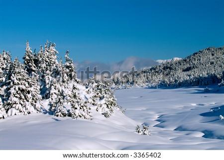 winter scenic in chugach forest region of alaska