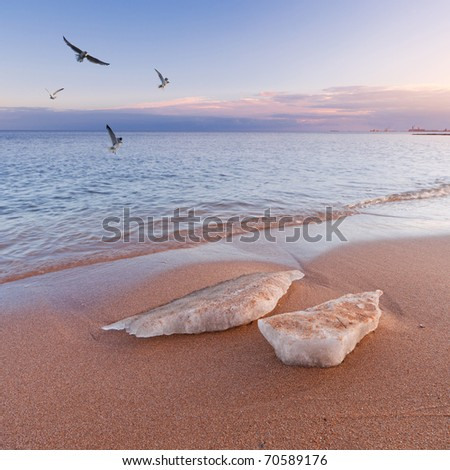Winter sea landscape with ice and seagulls