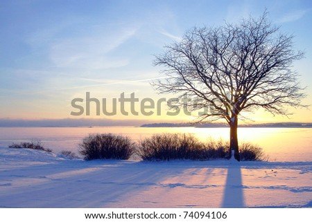 Winter sea sunset and tree in Finland