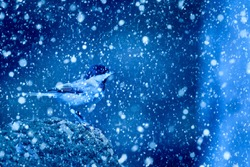 Winter season and animals. Falling snow. Blue nature background. Bird: Sombre Tit .