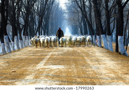 Winter, shepherd on country road