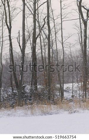 Winter Snow #519663754