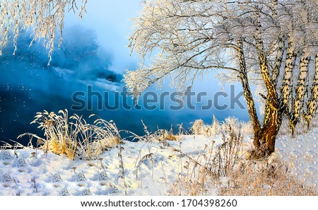 Winter snow birch tree forest. Winter snow birch. Winter snow scene