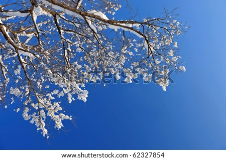 winter snow branches of tree on a blue sky background - stock photo