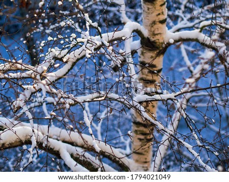 Winter snow covered bush view. Winter snow scene. Snow covered bush branches in winter. Winter snow buch.