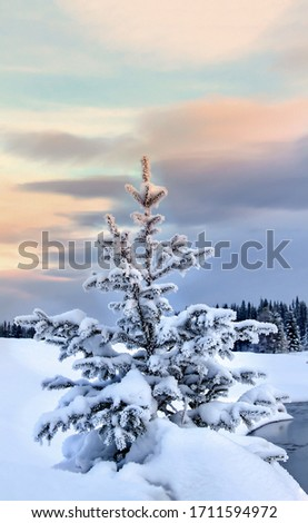 Winter snow covered fir tree view. Snow covered winter fir tree