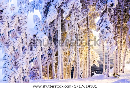 Winter snow covered tree trunks