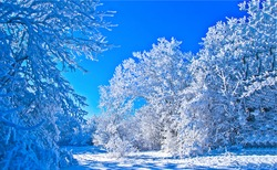 Winter snow covered trees in forest. Winter snow forest scene. Snowy winter forest trees. WInter snow scene